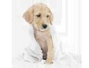 Nega i higijena pasa