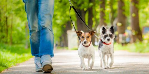 Povoci i ogrlice za pse