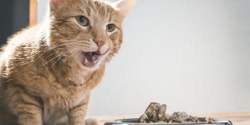 Najbolja hrana za mačke: kako prepoznati kvalitet?